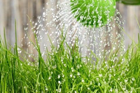 水やり 水 じょうろ 庭 地植え