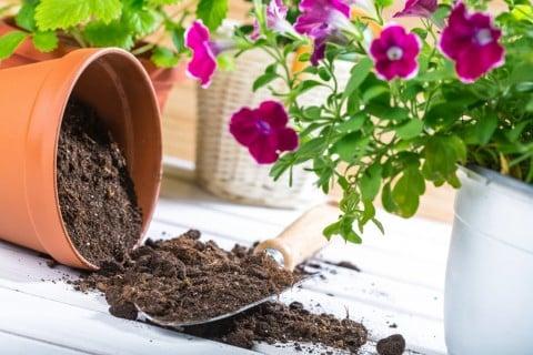 鉢 土作り 鉢植え 花