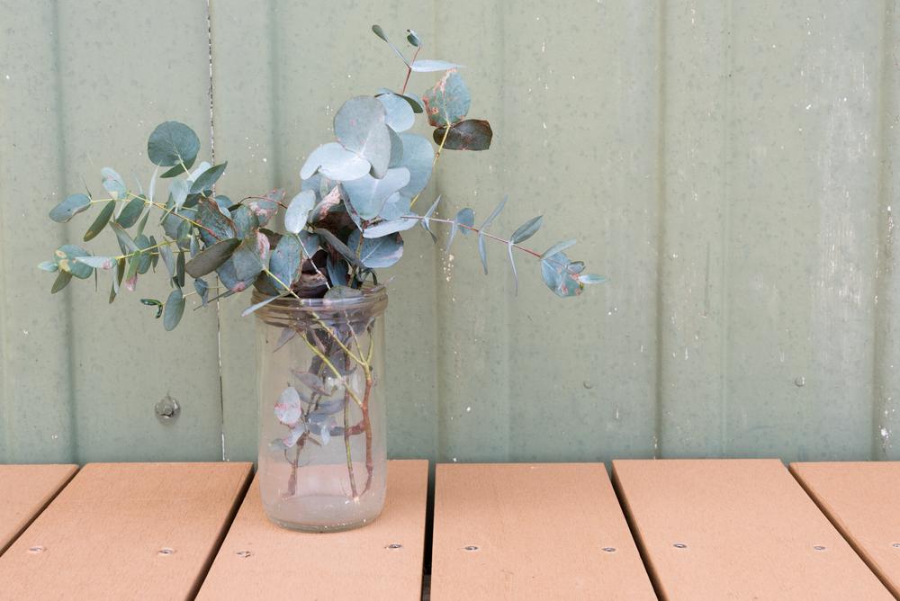 観葉植物ユーカリの葉の画像