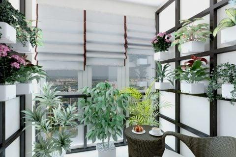 観葉植物 窓ぎわ