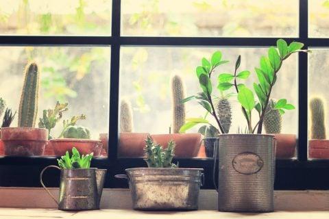観葉植物 ブリキ缶