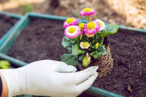 培養土 土 草花 プランター