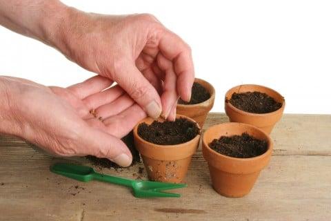 種まき 小鉢 小粒の種 たねまき