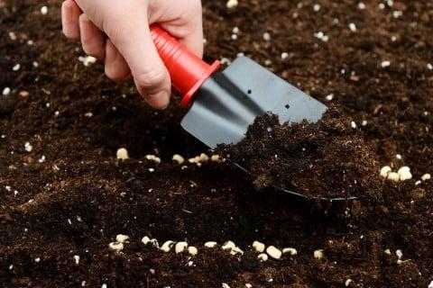 種まき 覆土 たねまき
