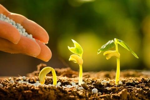 種まき 肥料 幼苗 たねまき