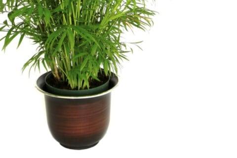 シュロチク 葉っぱ 緑 鉢植え 植え替え 棕櫚竹