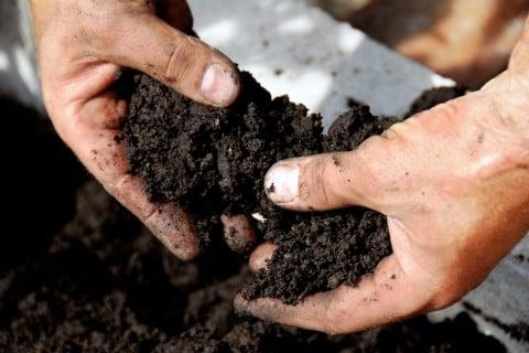 土作り 混ぜる 庭土 植え付け