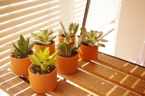多肉植物 鉢植え 日光 アロエ マンネングサ セダム2 オリジナル