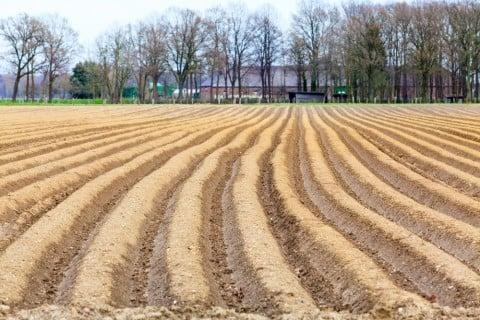 アスパラガス 畑