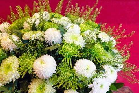 ピンポンマム 菊
