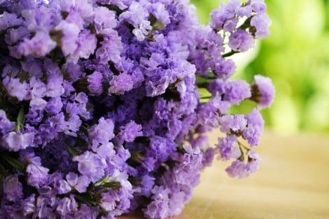 スターチス 花 紫 切り花 ドライフラワー