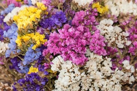 リモニウム スターチス 白 紫 花 黄 青