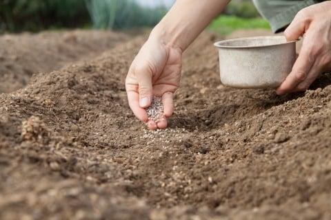 肥料 タイミング 化成肥料