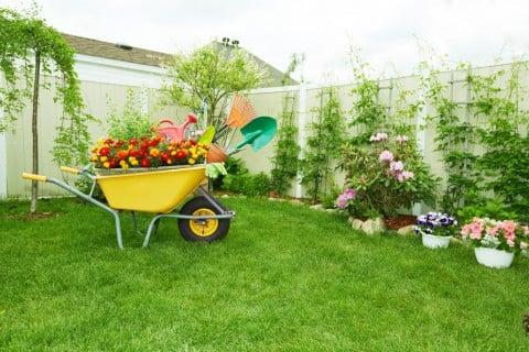 芝 芝生 ガーデニング 庭 手入れ