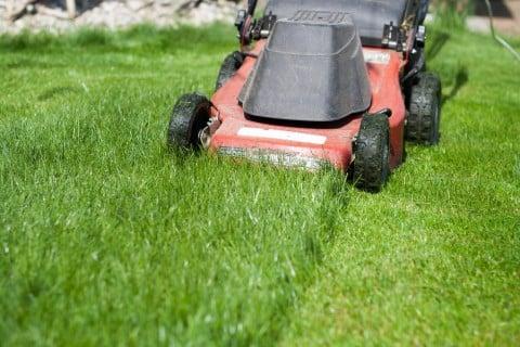 芝 芝生 ガーデニング 芝刈り機 手入れ