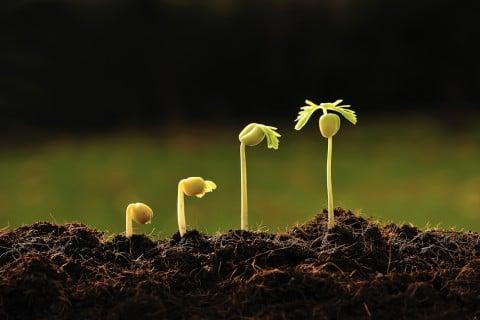 種まき 植物 生長 間引き 時期