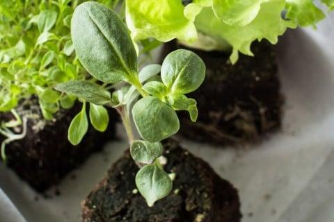 植物 苗 土