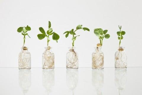 水挿し 花瓶 水耕栽培 水栽培 観葉植物