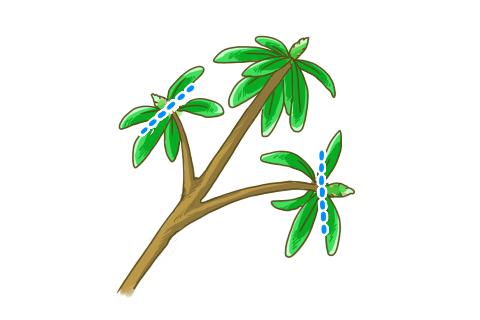 シャクナゲ 剪定 花芽摘み