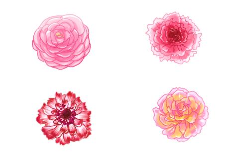 ラナンキュラス 花びら 咲き方 フリンジ咲き カメリア咲き ピオニー咲き カール咲き