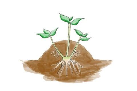 盛土法 増やし方 取り木