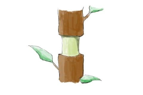 高取り法 取り木