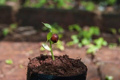 新芽 発芽 肥料 与え方 元肥 鉢植え 育苗ポット 植え付け