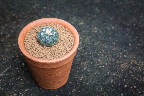 赤玉土 赤土 植え付け 鉢 サボテン 土作り