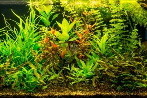 水草 水槽 水生植物