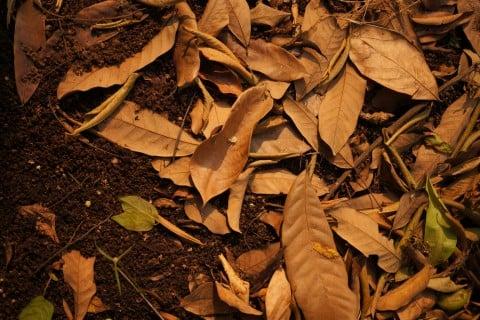 肥料 堆肥 落ち葉 腐葉土 枯れ葉 土