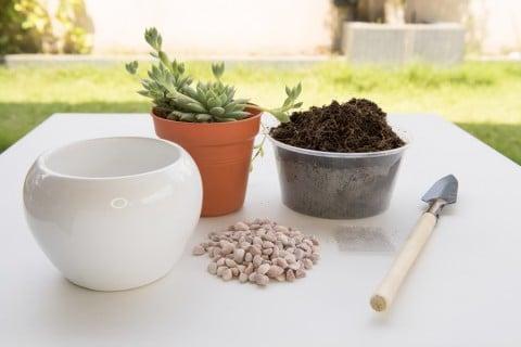 ガーデニング 鉢植え 多肉 鉢 土
