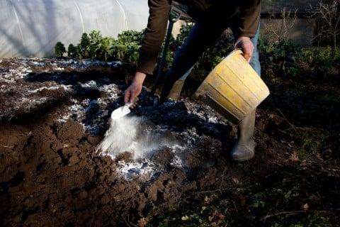 肥料 粉 ガーデニング 庭 消石灰