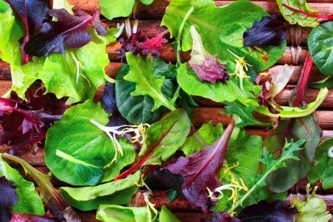 ベビーリーフ 種類 野菜 葉っぱ いっぱい 栄養素