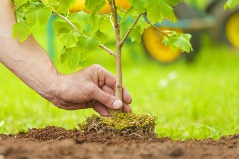 苗植え 土