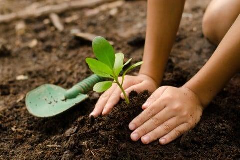 枝 挿し木 植え付け 土 苗木