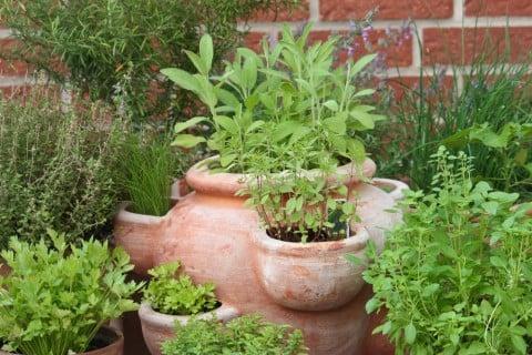 ハーブ 鉢植え 庭 ガーデニング