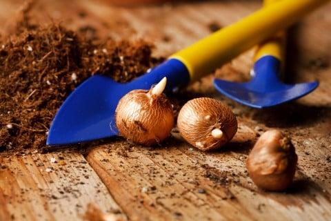球根 植え付け すポップ 土 テーブル