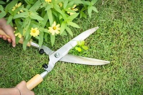 剪定鋏 ハサミ 剪定 高枝切り鋏 草 花 黄色 芝生