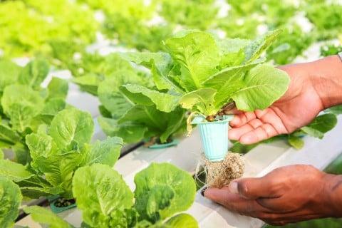 水耕栽培 鉢