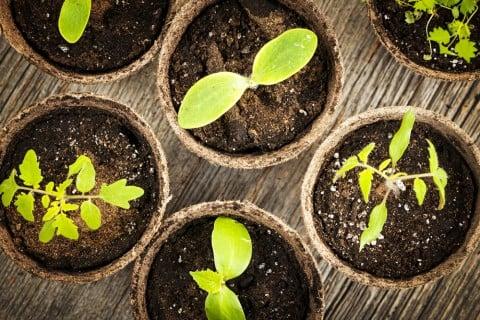 苗 植物 ジフィーポット