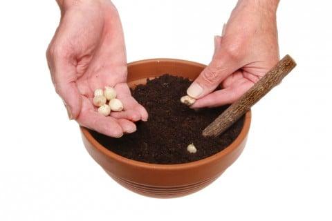 平鉢 種まき 土 苗床
