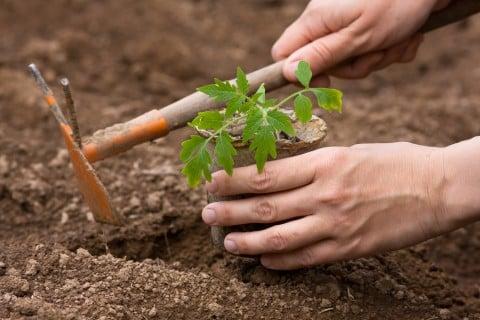 苗 植え方 方法 地植え スコップ