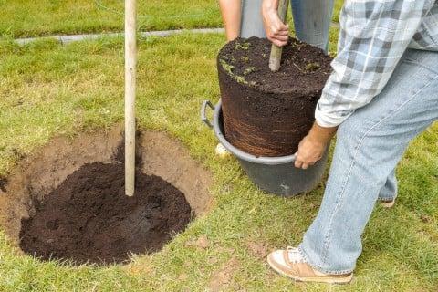 地植え 苗木 植え付け 植え方