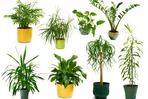 観葉植物 種類 寄せ植え