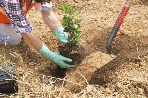地植え 苗木 植え付け 植え方 人 土