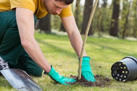 地植え 苗木 植え付け 植え方 踏み固め