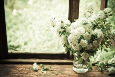shutterstockコデマリ スズカケ 庭木 花木 切り花 花瓶