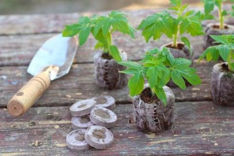 ジフィーセブン 種まき用土 幼苗 鉢上げ