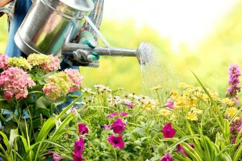 季節 ガーデニング 水やり 花壇