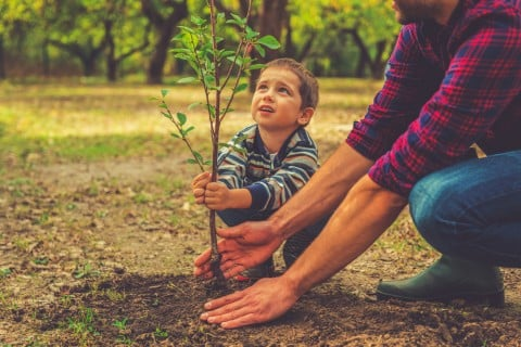 苗木 地植え